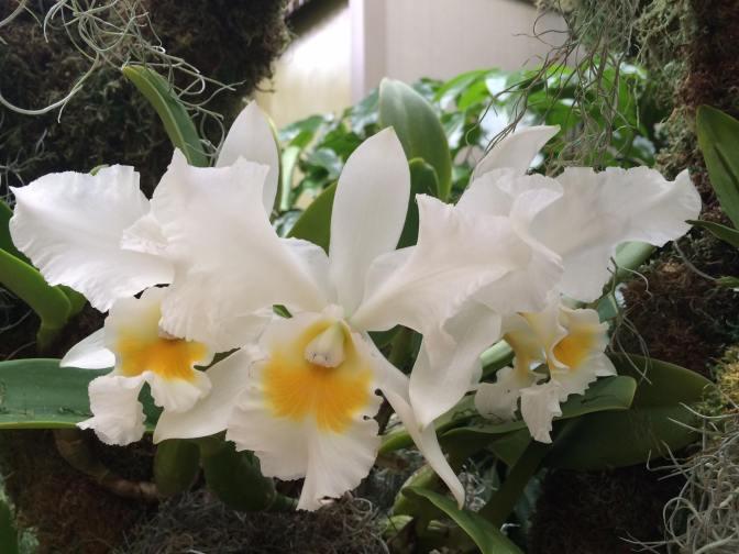 Orchid.ShawBotanicalGarden.BeverlyVanHorne