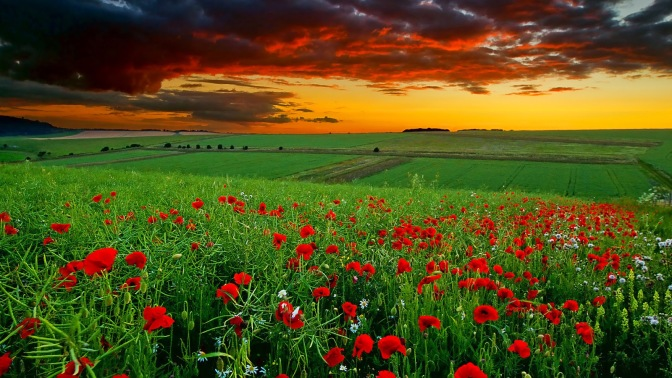 flowersfieldclouds-anzaq-com